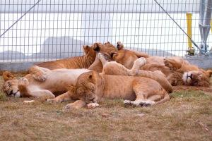 Animal Sactuary
