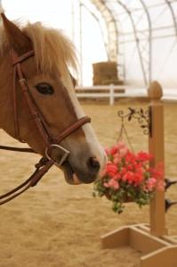 Isinglass Equestrian Center