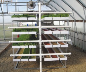 Fodder-Pro 2.0 Feed Systems