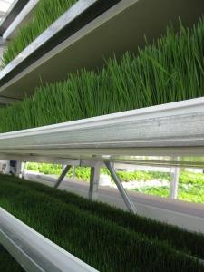 Fodder Greenhouses