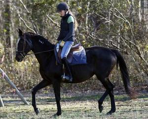 Horse test ride