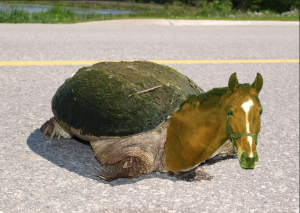 Turtle wins the race