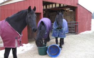 Horses kept warm and well fed