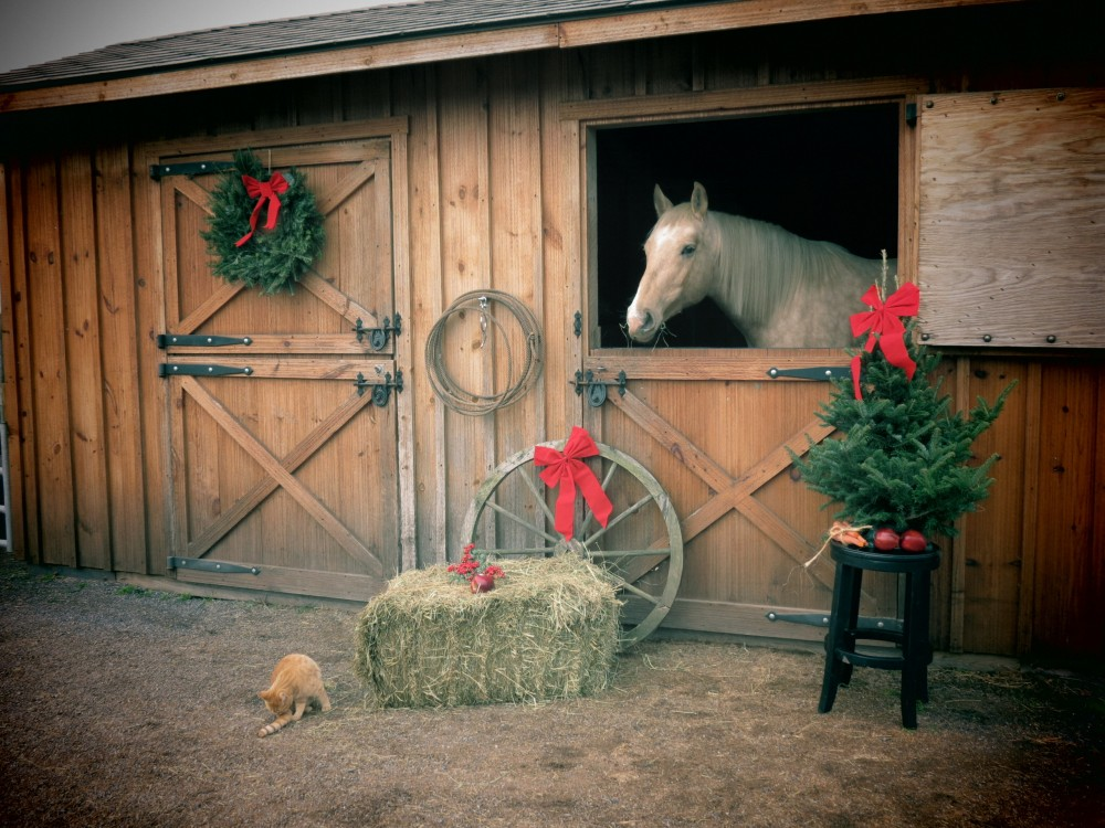 Holidays and horses