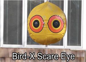 Bird-X Scare Eye