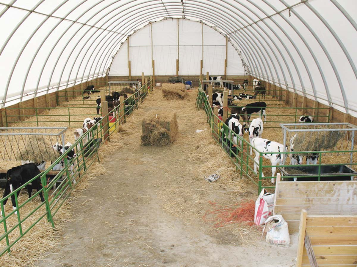 Customer Spotlight Raising Cattle With Clearspan