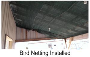 Installed Bird Netting