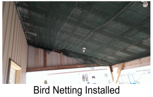Installed Bird Netting