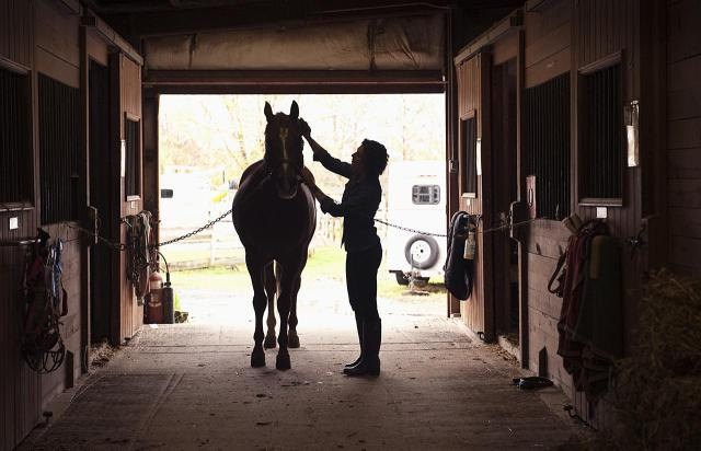 Horse Grooming for Spring