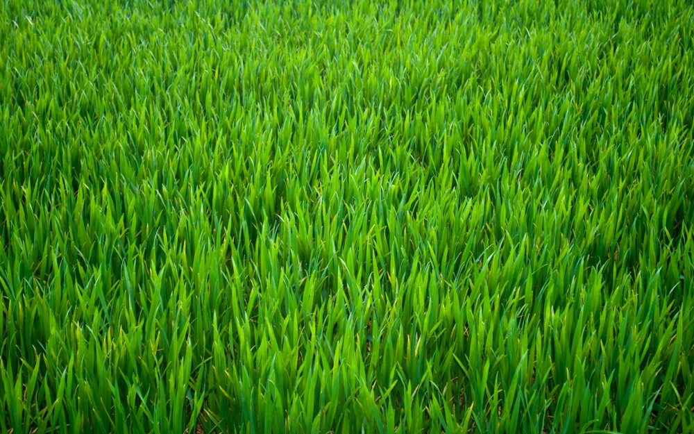green-grass-hd-wallpaper-7274-7274