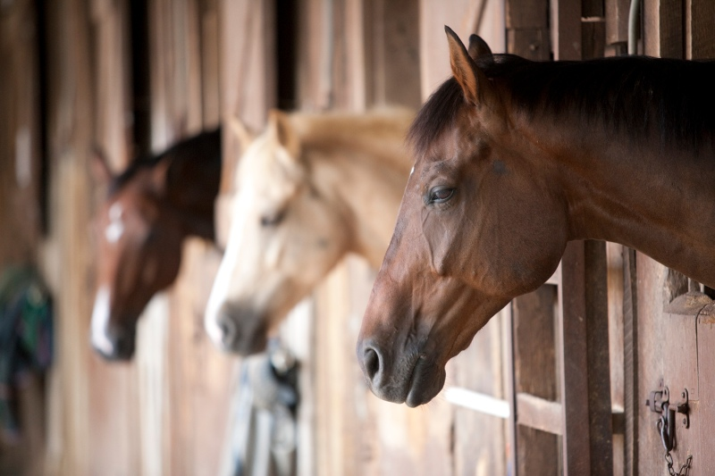 horses-in-stables-2